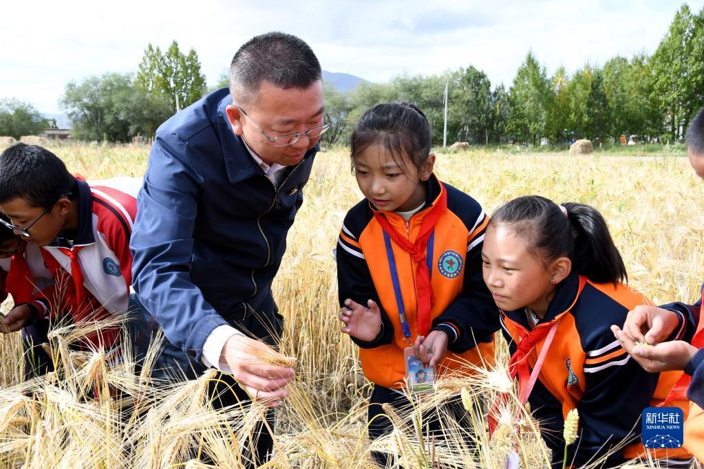 西藏:青稞地裏的思政課(圖)
