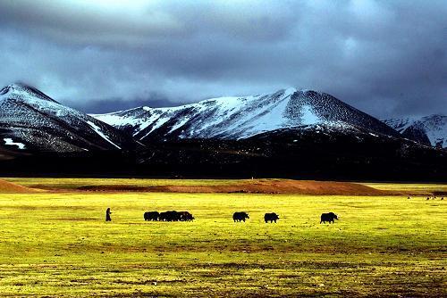 西藏45%區域列入生態保護紅線范圍