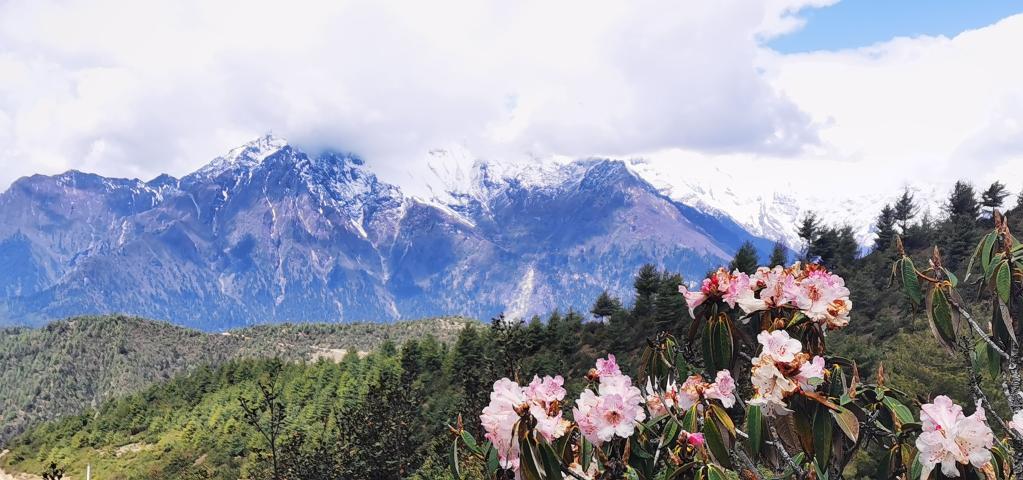 西藏吉隆溝:珠峰後花園(圖)